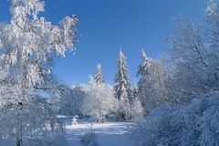 Magic Winter Forest (fluxxus1) Tags: blue trees winter light fab sky sun white snow tree nature forest landscape geotagged lumix europe frost day shadows belgium belgique crystal magic hiver perspective best panasonic explore wonderland venn soe hautes fagnes bestofthebest wallonie cubism hautesfagnes naturesfinest blueribbonwinner hohes flickrsbest bej baraquemichel mywinners abigfave platinumphoto lx3 wallonne favemegroup3 theunforgettablepictures newacademy overtheexcellence lumixaward theperfectphotographer spiritofphotography absolutelystunningscapes vosplusbellesphotos reflectyourworld phvalue novavitanewlife flickrclassique worldclassnaturephoto regionwide