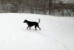 Lola_snow_30909