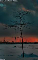 The Gathering Storm (Brian 104) Tags: tree clouds internationalflickrawards mwqio