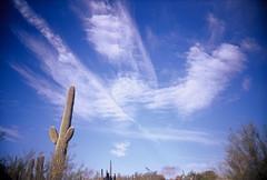Saguaro sky (kevin dooley) Tags: blue arizona cactus sky cloud southwest film phoenix gardens analog botanical lomo lomography slim desert kodak wide slide az 100 saguaro elitechrome viv vivitar e6 ultra ebx vuws vivalaviv