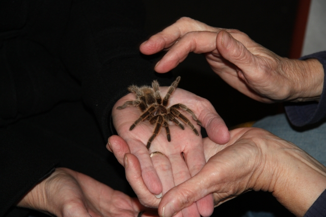 Adrienne in Ohio holding a tarantula (on vacation in Colorado)