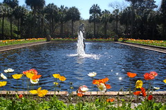Nature is a gift for all to enjoy! (Clara Hinton) Tags: flowers blue nature water fountain myrtlebeach peace gift poppies brookgreengardens goldstaraward clarahinton