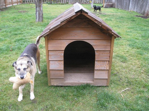 How To Convert An Old Dog House Into A Chicken Coop Green Garden