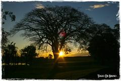 Fim de Tarde (Tiago De Brino) Tags: luz sol do explore rvore contra por