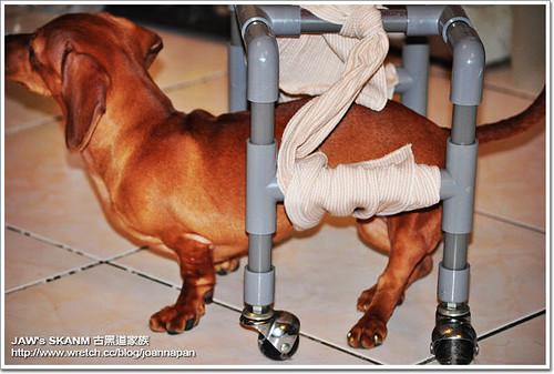 2009-04-13-「推愛心」DIY寵物輪椅第二版~請大家幫忙轉PO給需要的狗狗