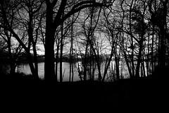 _MG_5305-6 (k.a. gilbert) Tags: longexposure trees sky bw lake silhouette night clouds reflections dark lights pond backyard overcast 116 lightroom uwa tokina1116mmf28