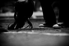 COCKFIGHT (69) (Peter_O'Driscoll) Tags: gambling game spur fight fighter attack culture cockpit clash peter coliseum rooster tradition breed combat gamble betting bet cultural gladiator manok gamecock gambler gallera sabong wager bloodsport cockfighting odriscoll stamina warrier panay gamefowl hahnenkampf cityoflove iloilocity combatdecoqs rinhadegalo bulang  colseum sagupaan g combattimentodigalli bulangan pasampok   riadegallos   sabonero manoktukaan peterodriscoll