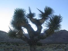 desertbassin