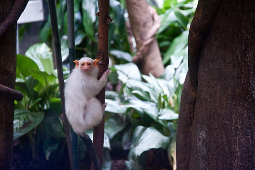 Central_Park_Zoo-17