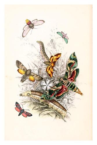 mariposa12