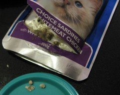 Contaminated cat food