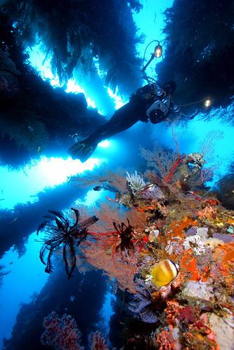philippines scuba divings spots