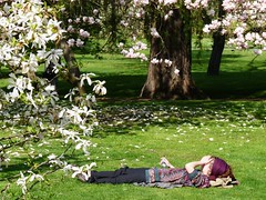 Having a rest under magnolia (LenkaSky) Tags: sleeping tree spring prague magnolia havingarest vojanovysady