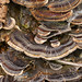Funghi sulla corteccia