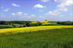 Rapsfelder (Jakob65) Tags: yellow jaune landscape rape amarillo gelb giallo landschaft raps saarland colza rapsblte aplusphoto kllerbach natureselegantshots