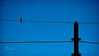 A Loud Silence.. (SonOfJordan) Tags: blue light shadow sky colour bird silhouette canon eos evening wire mood amman pole jordan silence third minimalism minimalist nightfall xsi thirds suset 450d الاردن samawi sonofjordan shadisamawi المملكةالاردنيةالهاشمية wwwshadisamawicom