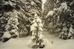 Kopaonik (wallygrom) Tags: winter snow skiing serbia skiresort 1991 blizzard yugoslavia grandhotel kopaonik february1991 kopaoniknationalpark