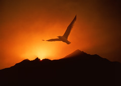 """Seagull soaring above sunrise (IronRodArt - Royce Bair (""""Star Shooter"""")) Tags: above new morning sunset mountain bird start sunrise happy hope dawn high goal promo day emotion top seagull altitude faith joy dream belief happiness adventure explore attitude beginning achievement believe future goals triumph leader positive concept conceptual soaring rise inspirational dawning exploration inspire discovery dreamer success challenge leadership inspiring greatness ambition excel courage motivate discover aspire motivational hopeful"""