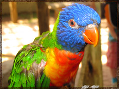 Perroquet color / colourful parrot (Lara-queen) Tags: summer canada cute bird nature animal canon ilovenature zoo quebec parrot granby t oiseau couleur estrie perroquet otw bavard colorphotoaward platinumheartaward platinumheartawards adorablecritters photoquebec quynhvu flickraward laraqueen esenciadelanaturaleza colorsphotoaward