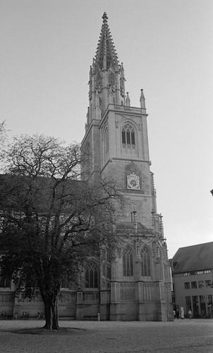 Baum vor dem Konstanzer Münster