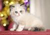 قطتي احلي قطة بالعالم نياااااااااااااو  5734282850_8dc917b07d_t