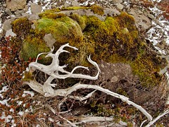 soil, moss and wood (Winfried Veil) Tags: wood nature stone moss veil earth stones natur steine soil root holz farne stein winfried moos wurzel erde dosh steinchen mobilew winfriedveil