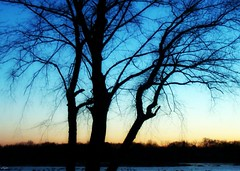 Strength to Stand Alone (VCH ) Tags: trees sunset sky lake snow tree ice newjersey pond dusk horizon nj treeline middlesex picnik spotswood