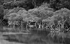 On the edge of Sydney (dicktay2000) Tags: trees bw water rock reflections place you sydney australia 2nd bundeena mainbar img6309 pfogold pfosilver friendlychallenges thechallengefactory thepinnaclehof tphofweek122 subthepinnaclenov2011