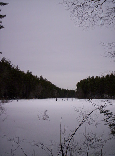 beaver brook 2009 012