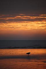 Crosby Beach (DipsyMagners) Tags: beach crosby crosbybeach