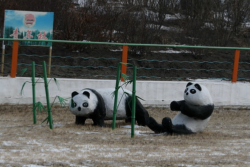 Zhalai Nuer Coal Mine Pandas (by niklausberger)