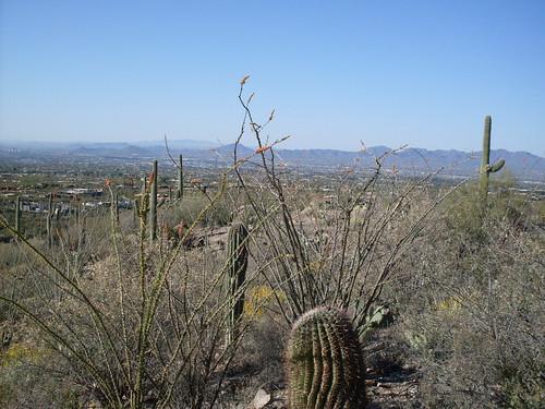 from Pima Canyon, near Tucson