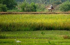 vellayani (thejasp) Tags: india color green bicycle d50 landscape nikon village kerala dslr indien southindia keralam southasia villagelife    indiatravel    thiruvananthapuram indiatourism thejas   sdindien vellayani  zuidindia 55200vr 55200mmvr  thejasp           suurindland