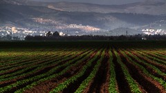 Powerful view across agriculture in the Hula Valley by Florian Seiffert (F*), on Flickr