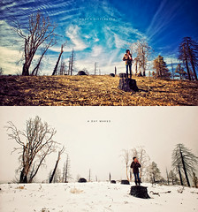 What a difference a day makes (isayx3) Tags: bear trees portrait snow contrast forest big nikon diptych 28mm f28 d3 wasteland nikor 24mmf28af