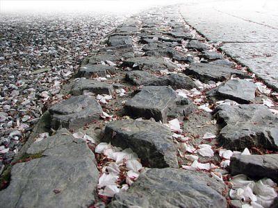 Лепестки на камнях