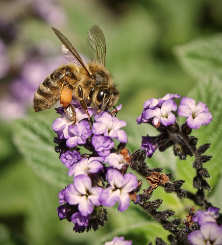 Bee - by Michael Scott