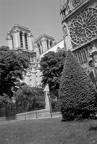 Notre-Dame and conifer