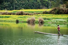 Bamboo rafting (Mel@photo break) Tags: china people green field yellow river village chinese bamboo mel countries rafting raft farmer melinda canola bambooraft wuyuan jiangxi    chanmelmel melindachan