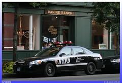 "Chevrolet Impala (2006) ""NYPD"" (uslovig) Tags: usa chevrolet police impala department auxiliary newyorknypd"