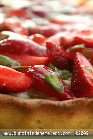 Strawberry Tart Y