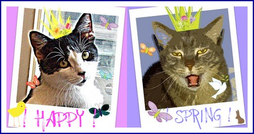 kitties, cartooned with butterflies