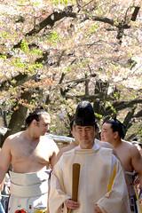 日馬富士 画像81