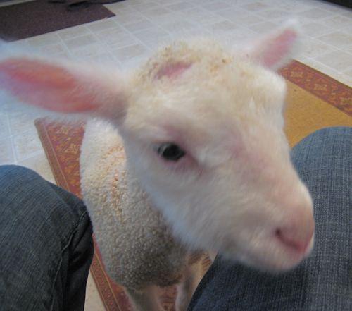 parry lamb