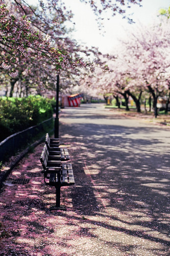 Matin tranquille -Sakura2009 #44-