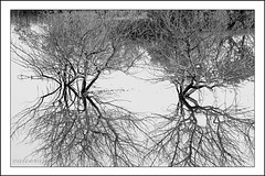 Reflections r Realisations... (valooran-) Tags: water self reflections blackwhite image doha qatar realisation murali malayalikkoottam valooran dhakira dohakoottam
