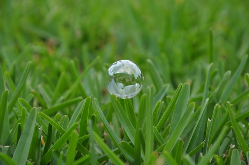 Bubble on St. Augustine grass