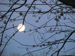 THE BEGINNING OF SPRING 2009 (roberthuffstutter) Tags: light moon love kissing memories romance moonlight artphotos oneofmybest huffstutter bestmoonaward