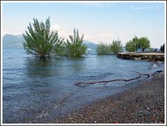 acqua alta (la Princesse sur le Pois) Tags: alberi lago acqua ramo azzurro isola pescatori