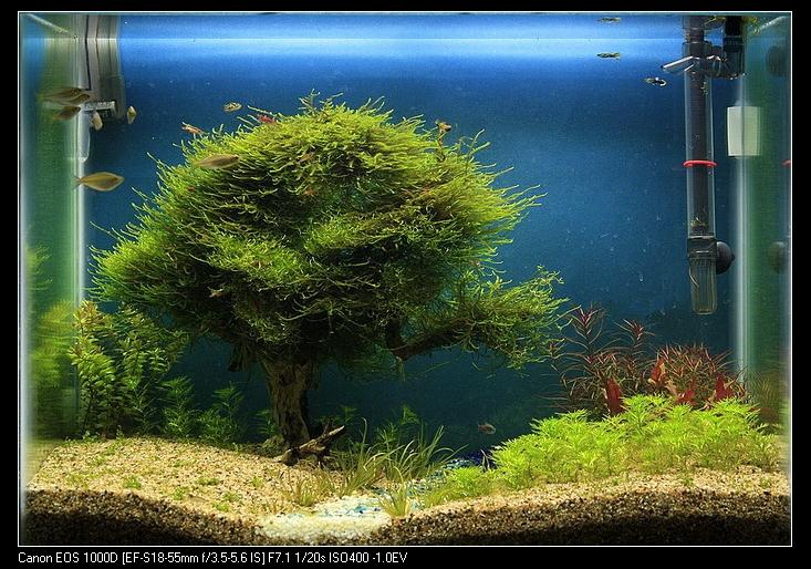 阿勝種的樹
